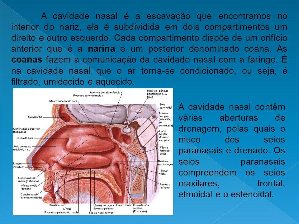 A cavidade nasal é a escavação que encontramos no interior do nariz, ela é subdividida em dois compartimentos um direito e outro esquerdo. Cada compar