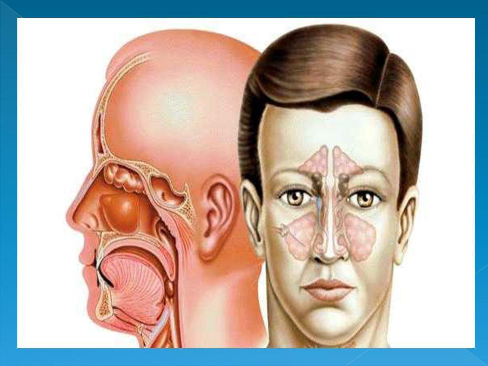 FARINGE A faringe é um tubo que começa nas coanas e estende-se para baixo no pescoço.