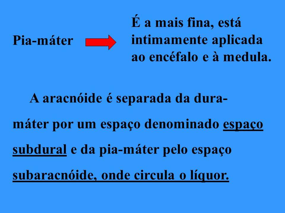 Pia-máter É a mais fina, está intimamente aplicada ao encéfalo e à medula. A aracnóide é separada da dura- máter por um espaço denominado espaço subdu