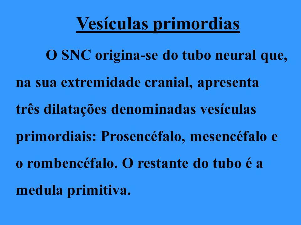 Vesículas primordias O SNC origina-se do tubo neural que, na sua extremidade cranial, apresenta três dilatações denominadas vesículas primordiais: Pro