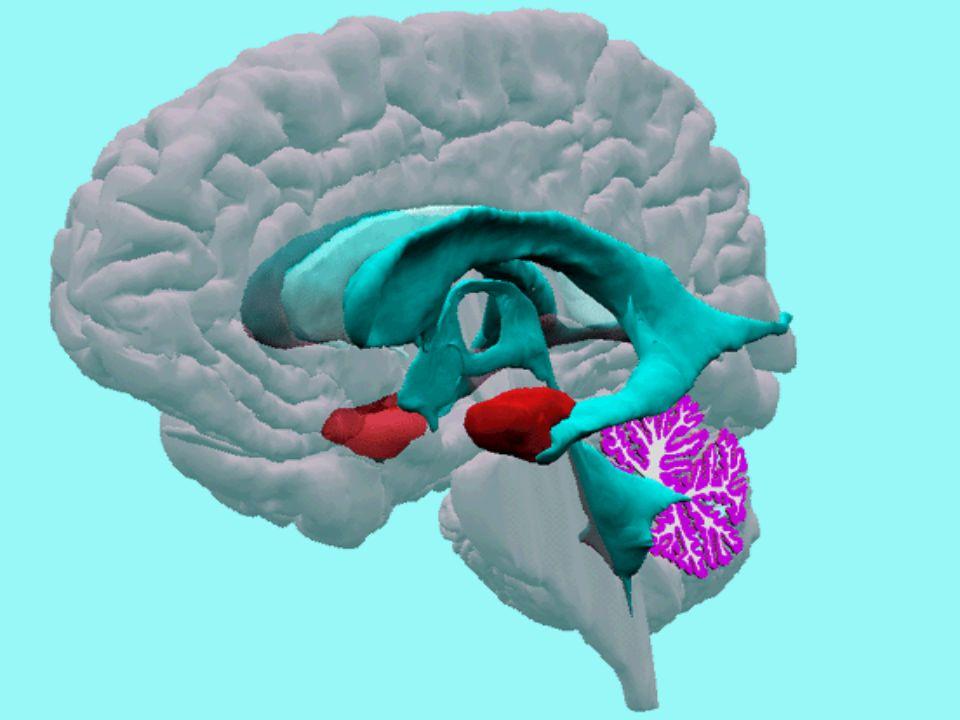 Líquor No espaço subaracnóide e nos ventrículos circula um líquido de composição química pobre em protéinas, denominado líquido cérebro-espinhal ou líquor, sendo uma de suas mais importantes funções proteger o SNC, agindo como amortecedor de choques.