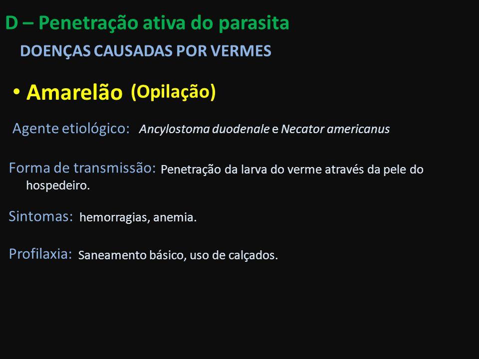 Amarelão Agente etiológico: Forma de transmissão: Ancylostoma duodenale e Necator americanus (Opilação) Penetração da larva do verme através da pele d