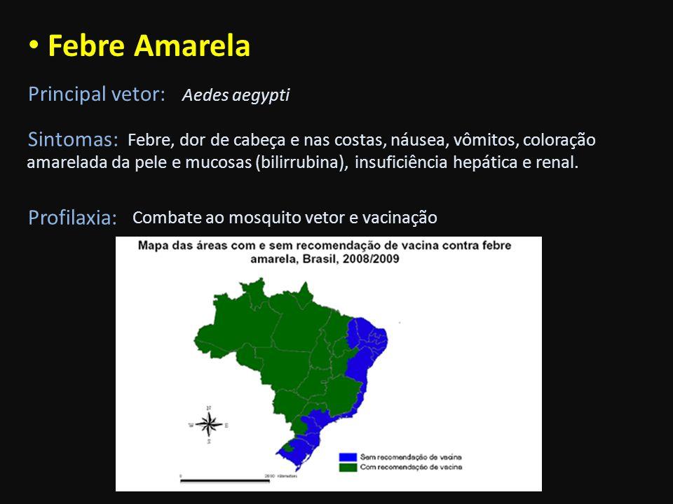 Febre Amarela Principal vetor: Aedes aegypti Sintomas: Febre, dor de cabeça e nas costas, náusea, vômitos, coloração amarelada da pele e mucosas (bili