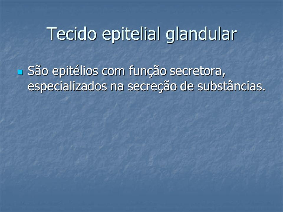 Tecido epitelial glandular São epitélios com função secretora, especializados na secreção de substâncias. São epitélios com função secretora, especial