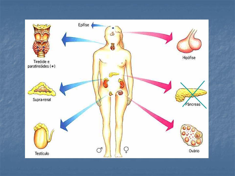 Glândulas Anfícrinas ou Mistas Pâncreas: parte exócrina secreta suco pancreático (digestão), parte endócrina secreta os hormônios insulina e glucagon (regulam a glicemia do sangue).