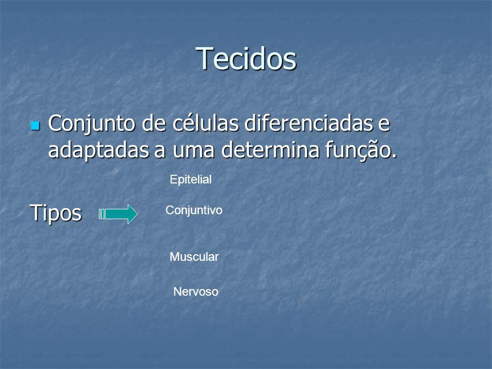Tecidos Conjunto de células diferenciadas e adaptadas a uma determina função. Conjunto de células diferenciadas e adaptadas a uma determina função.Tip