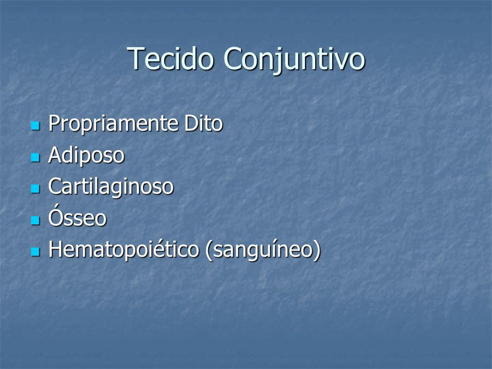 Tecido Conjuntivo Propriamente Dito Propriamente Dito Adiposo Adiposo Cartilaginoso Cartilaginoso Ósseo Ósseo Hematopoiético (sanguíneo) Hematopoiétic