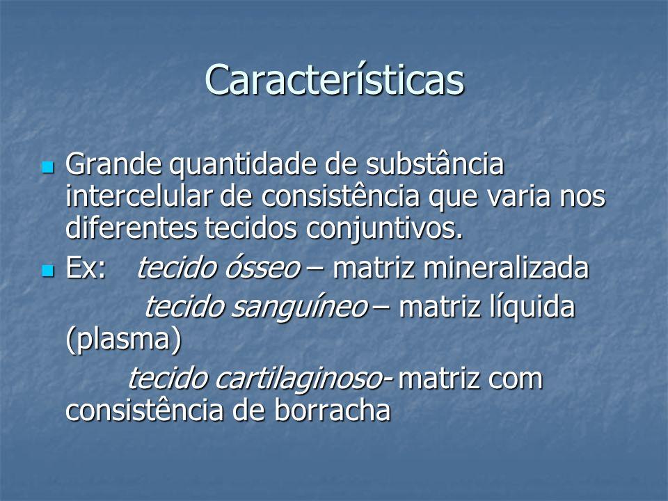 Características Grande quantidade de substância intercelular de consistência que varia nos diferentes tecidos conjuntivos. Grande quantidade de substâ