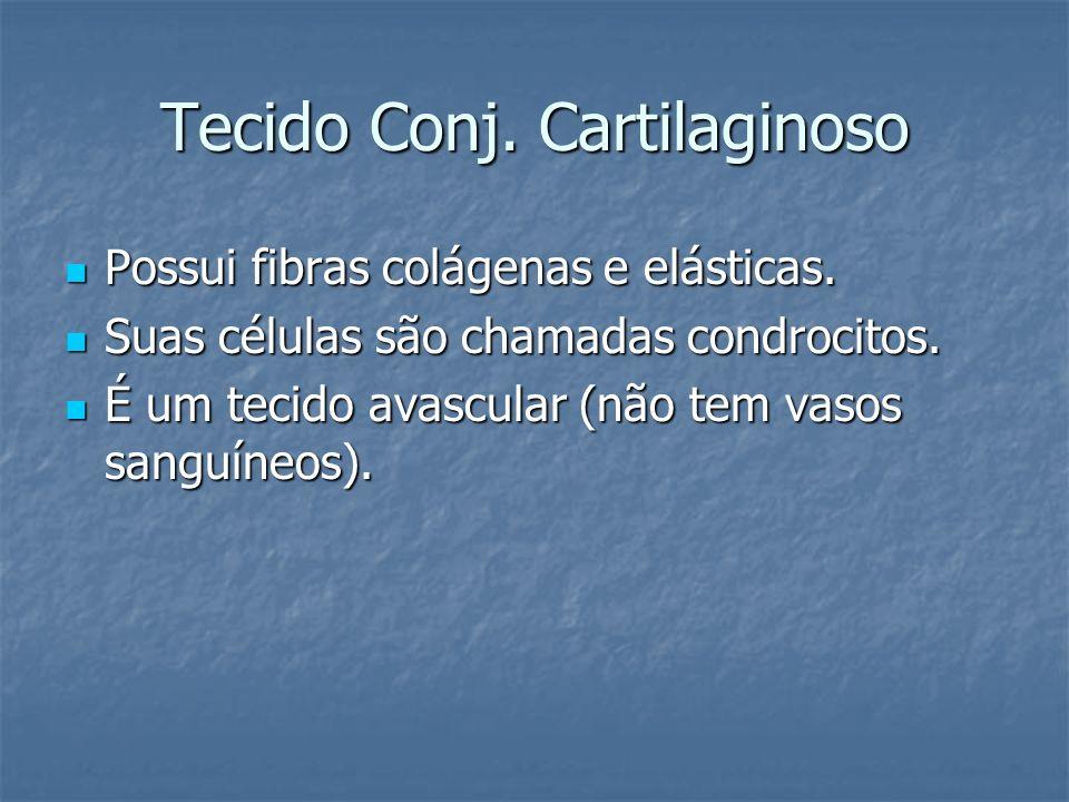Tecido Conj. Cartilaginoso Possui fibras colágenas e elásticas. Possui fibras colágenas e elásticas. Suas células são chamadas condrocitos. Suas célul