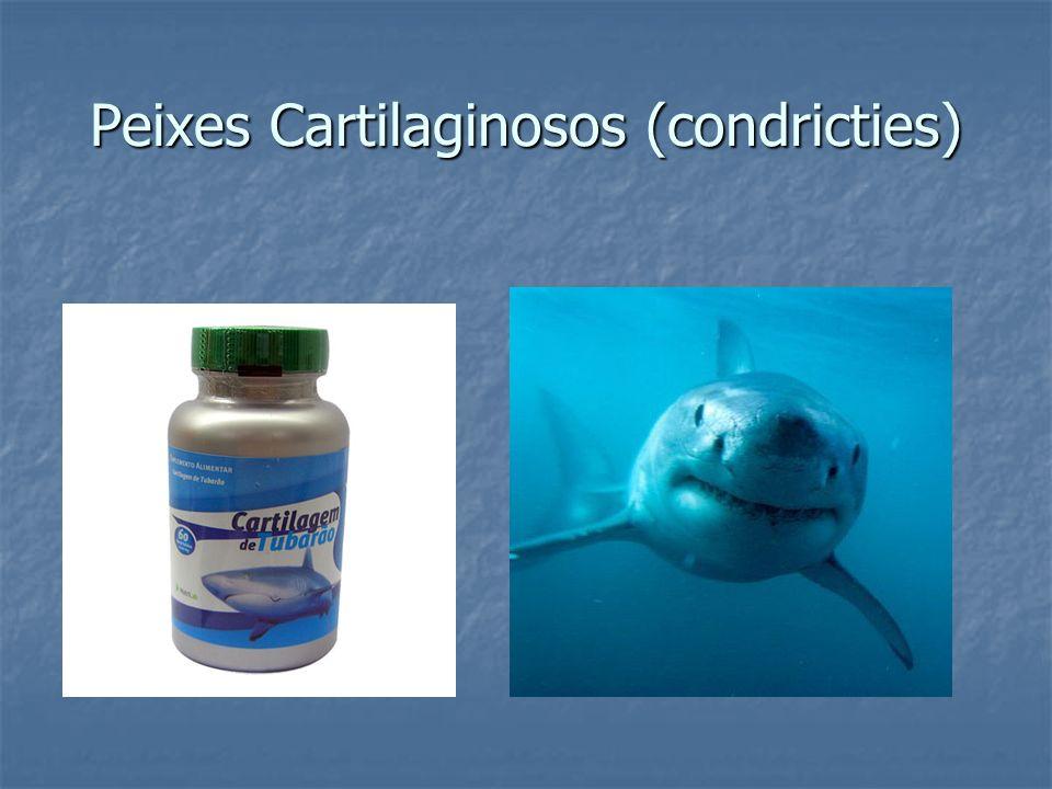 Peixes Cartilaginosos (condricties)