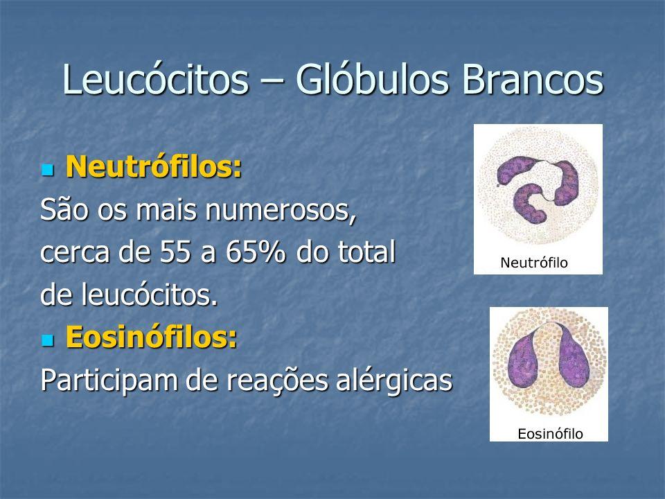 Leucócitos – Glóbulos Brancos Neutrófilos: Neutrófilos: São os mais numerosos, cerca de 55 a 65% do total de leucócitos. Eosinófilos: Eosinófilos: Par
