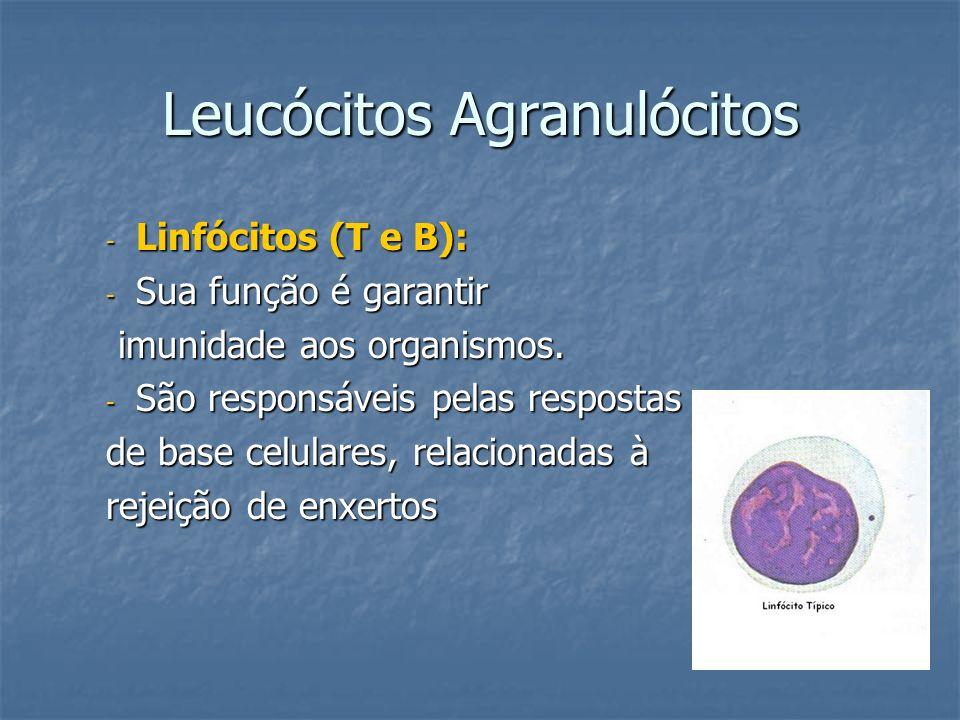 Leucócitos Agranulócitos - Linfócitos (T e B): - Sua função é garantir imunidade aos organismos. imunidade aos organismos. - São responsáveis pelas re