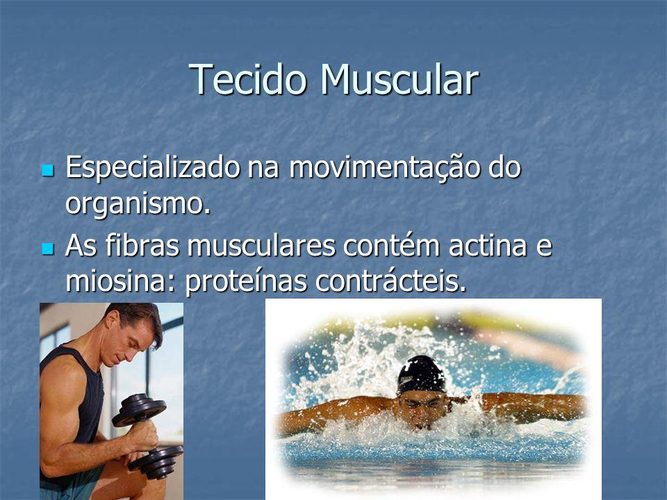 Especializado na movimentação do organismo. Especializado na movimentação do organismo. As fibras musculares contém actina e miosina: proteínas contrá