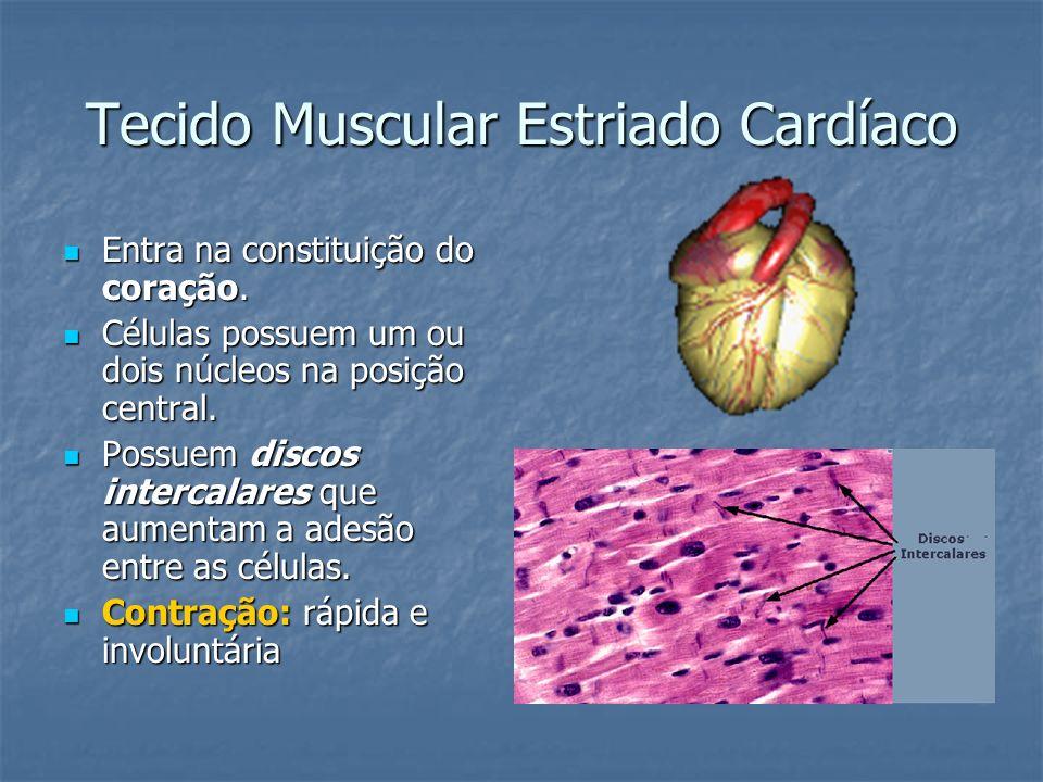 Tecido Muscular Estriado Cardíaco Entra na constituição do coração. Entra na constituição do coração. Células possuem um ou dois núcleos na posição ce