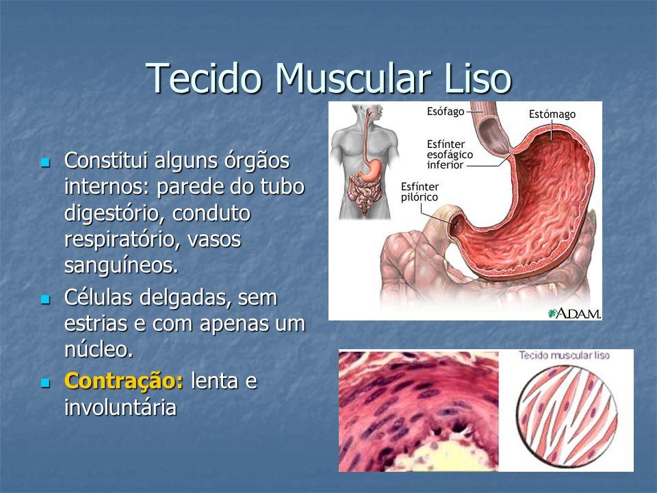 Tecido Muscular Liso Constitui alguns órgãos internos: parede do tubo digestório, conduto respiratório, vasos sanguíneos. Constitui alguns órgãos inte