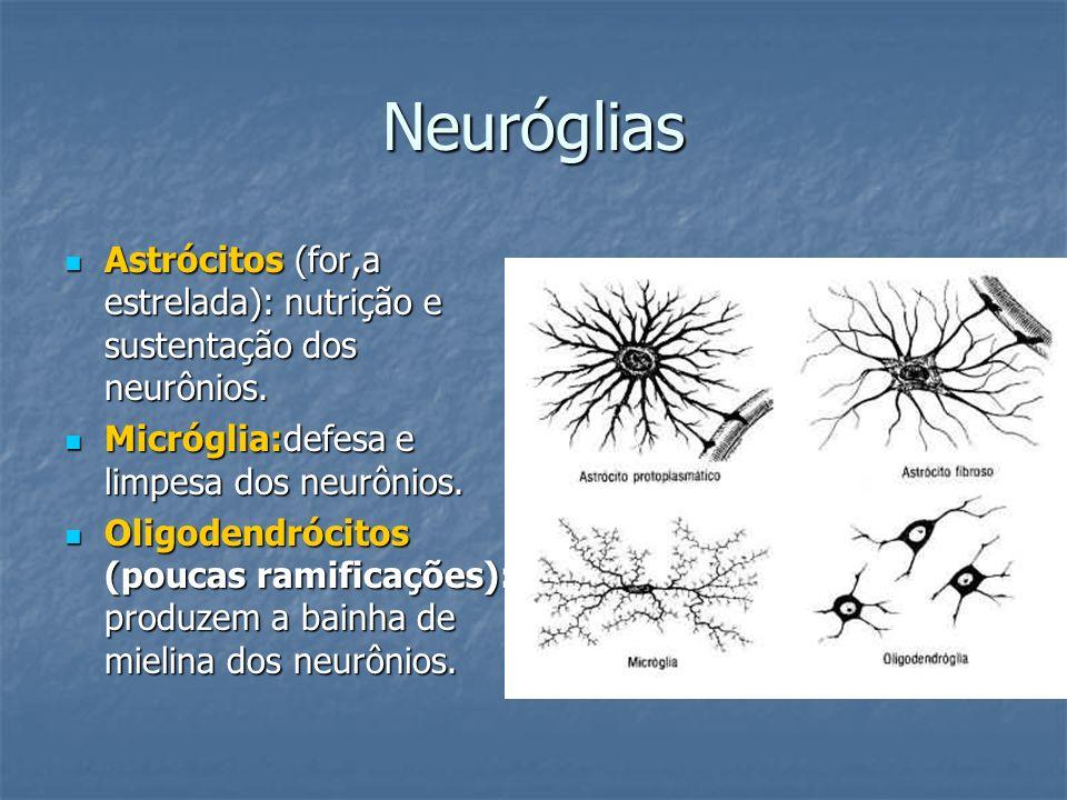 Neuróglias Astrócitos (for,a estrelada): nutrição e sustentação dos neurônios. Astrócitos (for,a estrelada): nutrição e sustentação dos neurônios. Mic