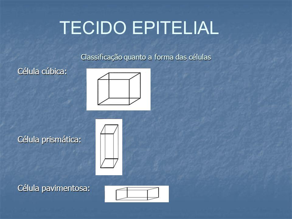 Classificação quanto a forma das células Célula cúbica: Célula prismática: Célula pavimentosa: TECIDO EPITELIAL