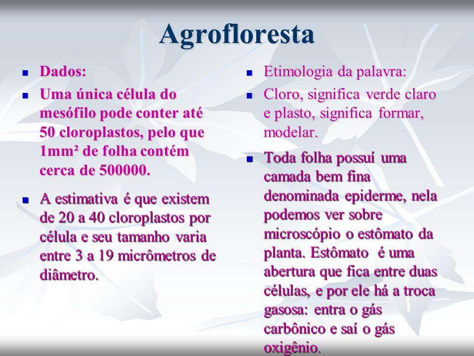 Agrofloresta Dados: Dados: Uma única célula do mesófilo pode conter até 50 cloroplastos, pelo que 1mm² de folha contém cerca de 500000. Uma única célu