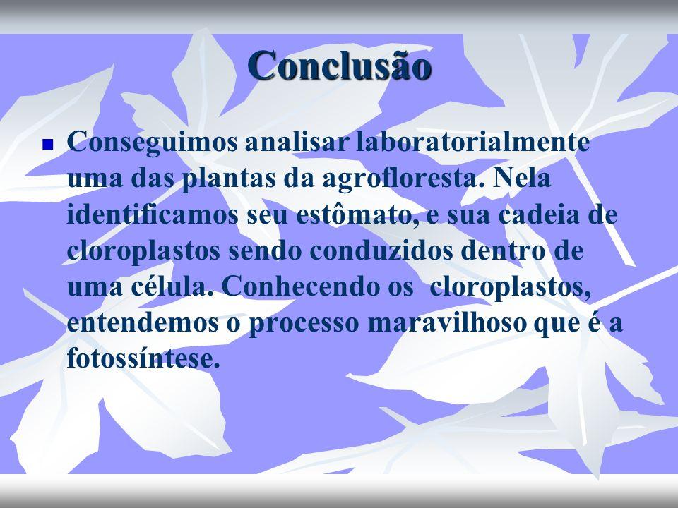 Conclusão Conseguimos analisar laboratorialmente uma das plantas da agrofloresta. Nela identificamos seu estômato, e sua cadeia de cloroplastos sendo
