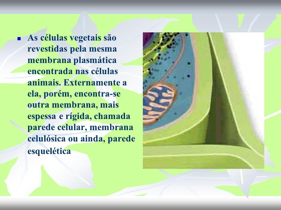 As células vegetais são revestidas pela mesma membrana plasmática encontrada nas células animais. Externamente a ela, porém, encontra-se outra membran