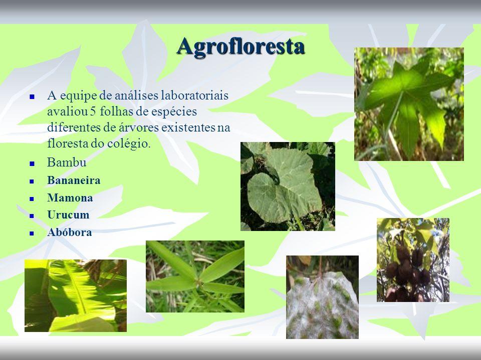 Agrofloresta A equipe de análises laboratoriais avaliou 5 folhas de espécies diferentes de árvores existentes na floresta do colégio. Bambu Bananeira