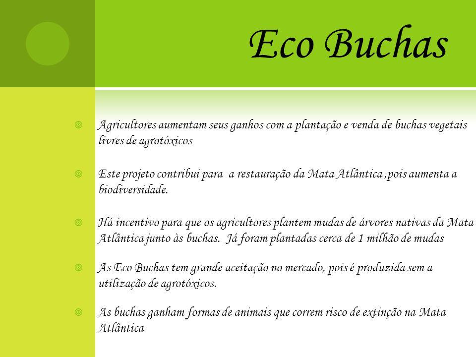 Eco Buchas Agricultores aumentam seus ganhos com a plantação e venda de buchas vegetais livres de agrotóxicos Este projeto contribui para a restauraçã
