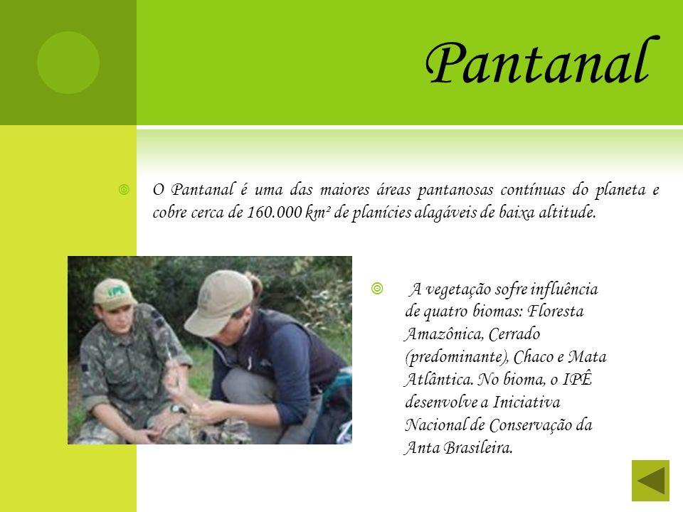 Pantanal O Pantanal é uma das maiores áreas pantanosas contínuas do planeta e cobre cerca de 160.000 km² de planícies alagáveis de baixa altitude. A v