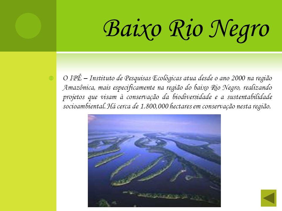 Baixo Rio Negro O IPÊ – Instituto de Pesquisas Ecológicas atua desde o ano 2000 na região Amazônica, mais especificamente na região do baixo Rio Negro