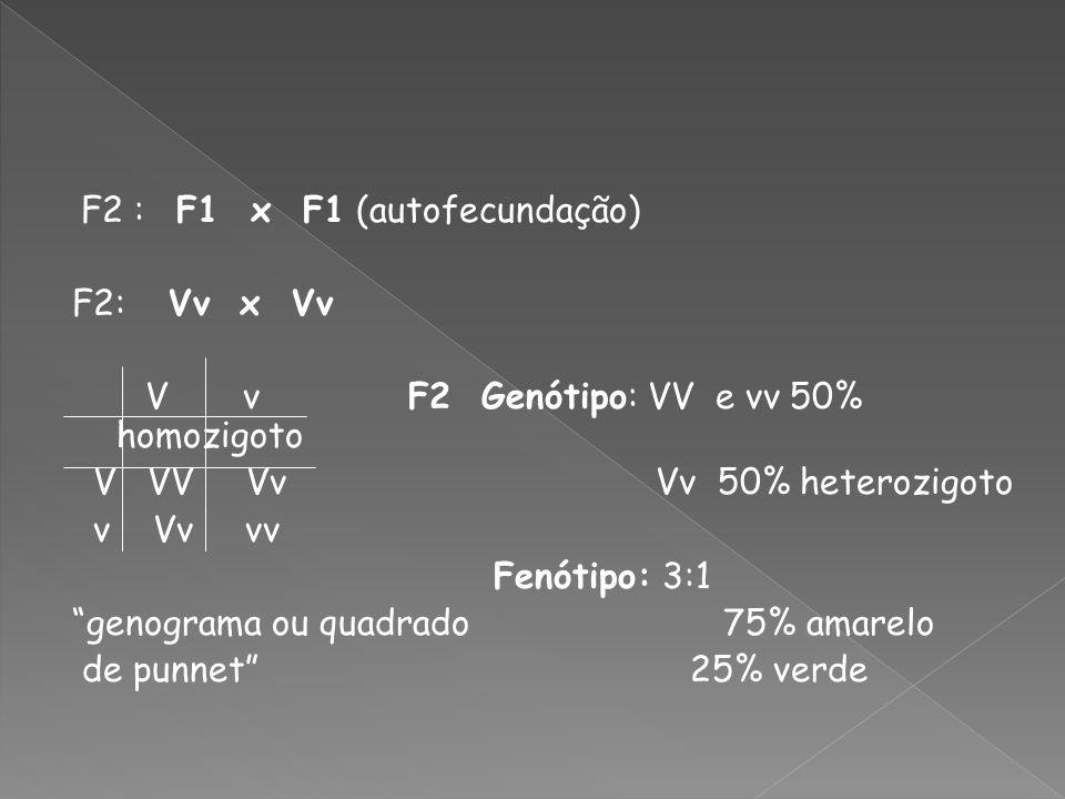 F2 : F1 x F1 (autofecundação) F2: Vv x Vv V v F2 Genótipo: VV e vv 50% homozigoto V VV Vv Vv 50% heterozigoto v Vv vv Fenótipo: 3:1 genograma ou quadr