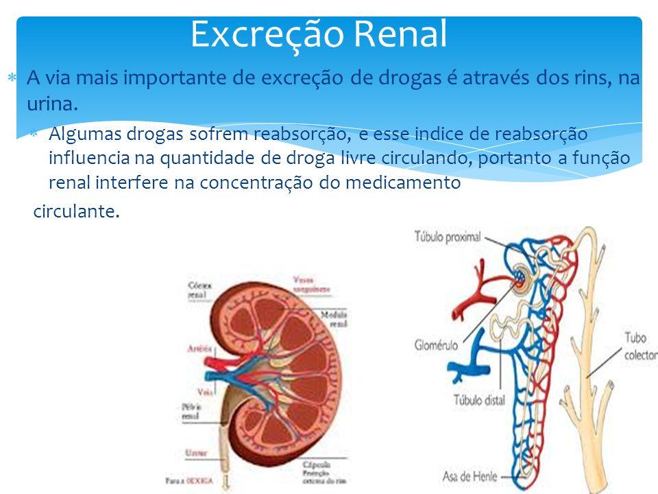 A via mais importante de excreção de drogas é através dos rins, na urina. Algumas drogas sofrem reabsorção, e esse indice de reabsorção influencia na