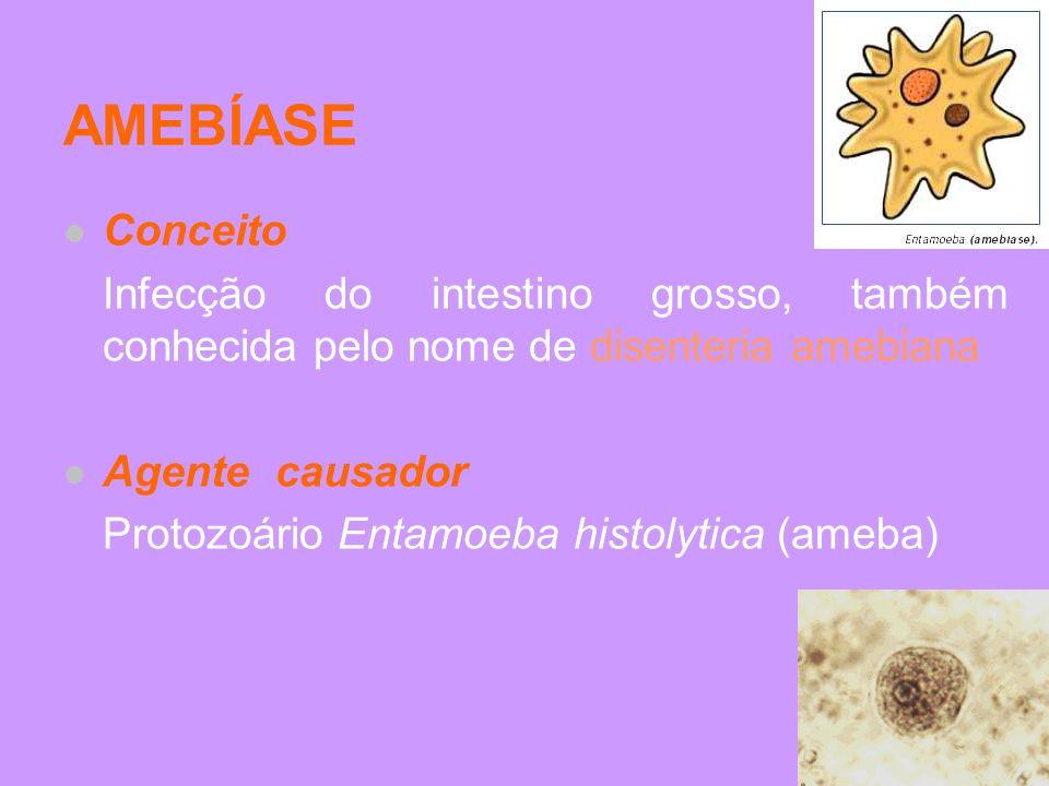 AMEBÍASE Conceito Infecção do intestino grosso, também conhecida pelo nome de disenteria amebiana Agente causador Protozoário Entamoeba histolytica (a