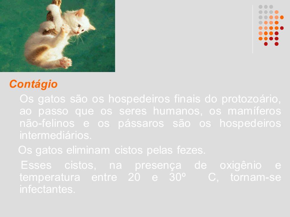 Contágio Os gatos são os hospedeiros finais do protozoário, ao passo que os seres humanos, os mamíferos não-felinos e os pássaros são os hospedeiros i