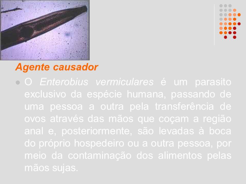 Agente causador O Enterobius vermiculares é um parasito exclusivo da espécie humana, passando de uma pessoa a outra pela transferência de ovos através