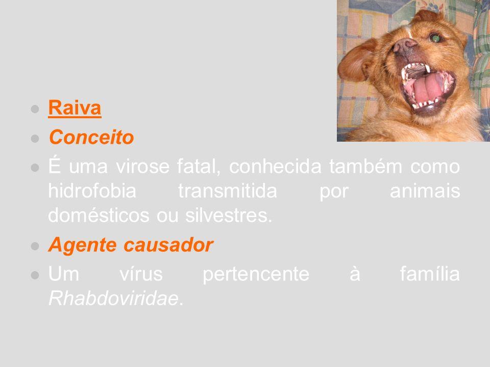 Raiva Conceito É uma virose fatal, conhecida também como hidrofobia transmitida por animais domésticos ou silvestres. Agente causador Um vírus pertenc