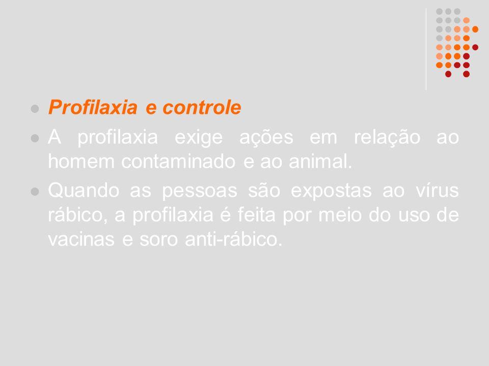 Profilaxia e controle A profilaxia exige ações em relação ao homem contaminado e ao animal. Quando as pessoas são expostas ao vírus rábico, a profilax
