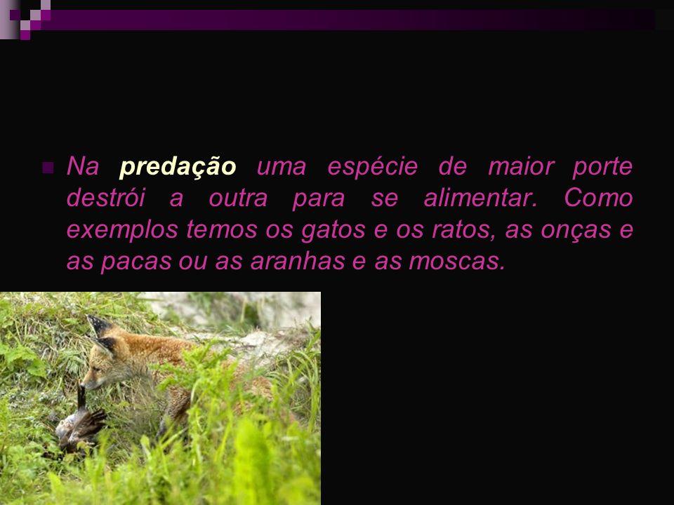 Na predação uma espécie de maior porte destrói a outra para se alimentar. Como exemplos temos os gatos e os ratos, as onças e as pacas ou as aranhas e