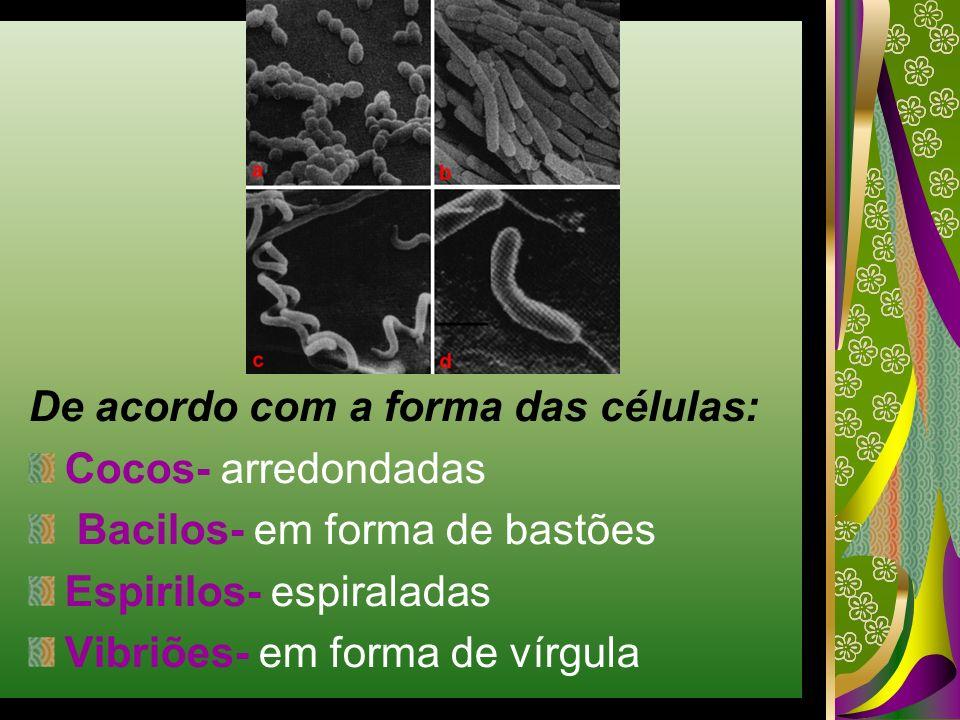 De acordo com a forma das células: Cocos- arredondadas Bacilos- em forma de bastões Espirilos- espiraladas Vibriões- em forma de vírgula