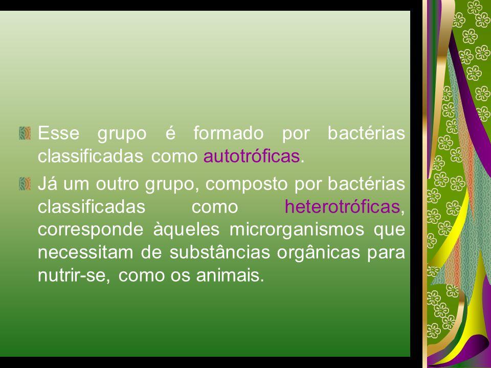 Esse grupo é formado por bactérias classificadas como autotróficas. Já um outro grupo, composto por bactérias classificadas como heterotróficas, corre