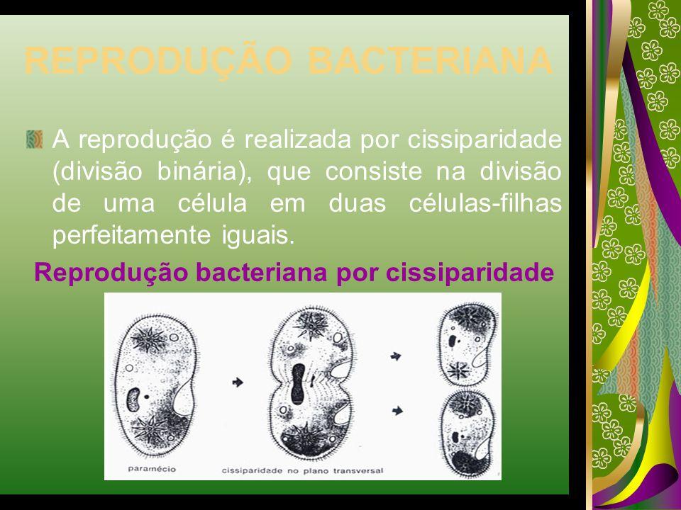 REPRODUÇÃO BACTERIANA A reprodução é realizada por cissiparidade (divisão binária), que consiste na divisão de uma célula em duas células-filhas perfe