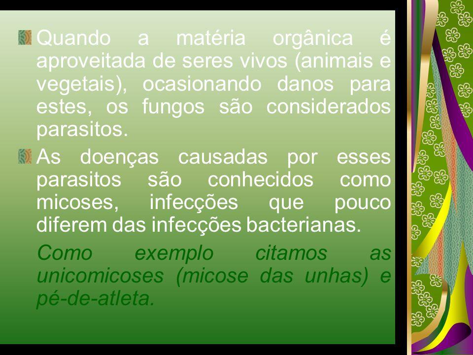 Quando a matéria orgânica é aproveitada de seres vivos (animais e vegetais), ocasionando danos para estes, os fungos são considerados parasitos. As do