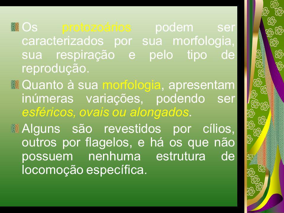Os protozoários podem ser caracterizados por sua morfologia, sua respiração e pelo tipo de reprodução. Quanto à sua morfologia, apresentam inúmeras va