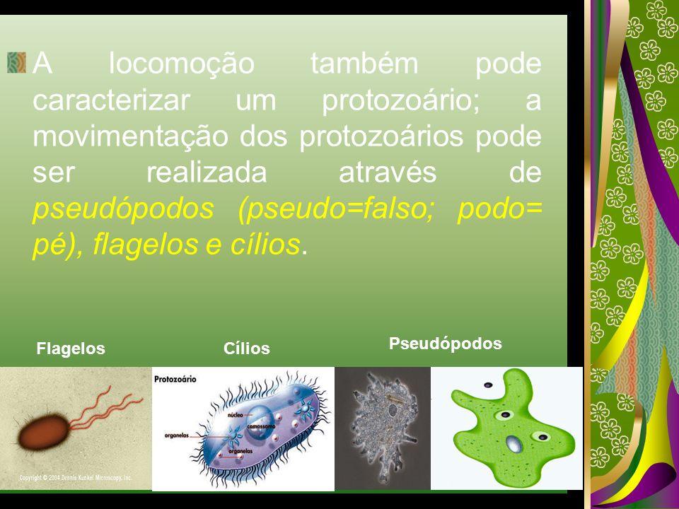 A locomoção também pode caracterizar um protozoário; a movimentação dos protozoários pode ser realizada através de pseudópodos (pseudo=falso; podo= pé