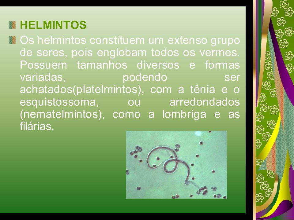 HELMINTOS Os helmintos constituem um extenso grupo de seres, pois englobam todos os vermes. Possuem tamanhos diversos e formas variadas, podendo ser a