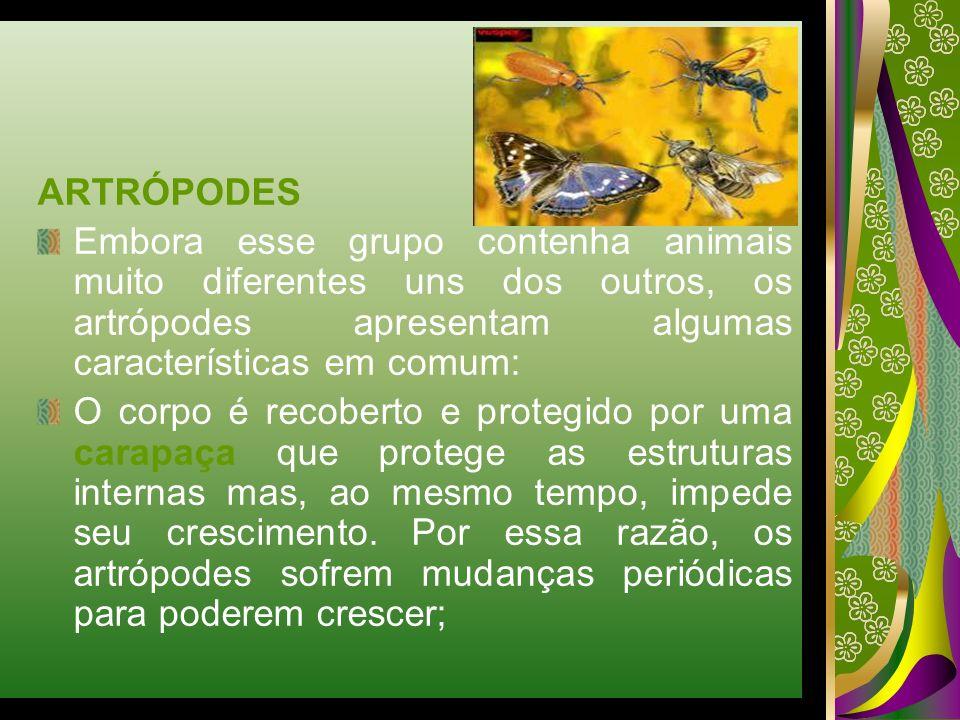 ARTRÓPODES Embora esse grupo contenha animais muito diferentes uns dos outros, os artrópodes apresentam algumas características em comum: O corpo é re