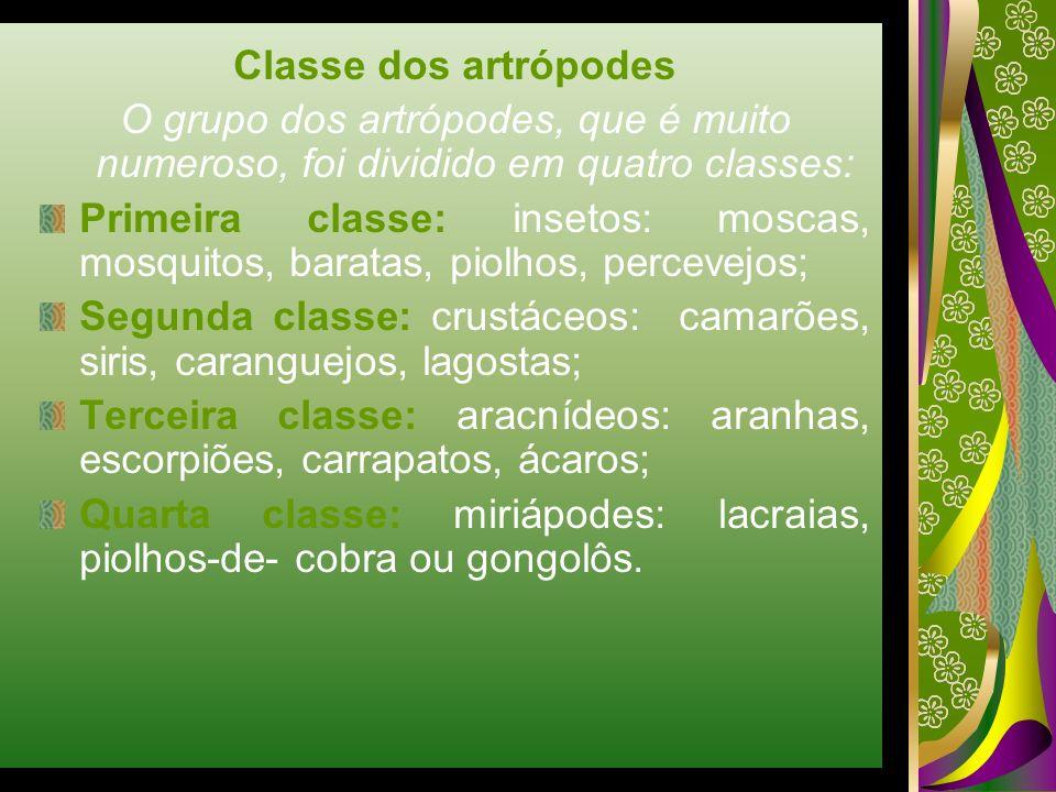 Classe dos artrópodes O grupo dos artrópodes, que é muito numeroso, foi dividido em quatro classes: Primeira classe: insetos: moscas, mosquitos, barat
