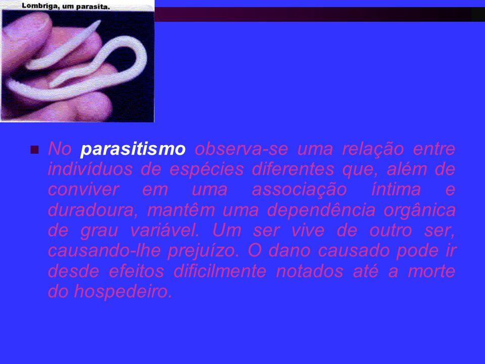 No parasitismo observa-se uma relação entre indivíduos de espécies diferentes que, além de conviver em uma associação íntima e duradoura, mantêm uma d