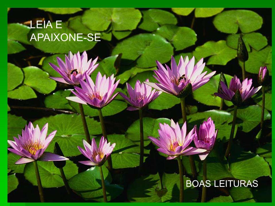 LEIA E APAIXONE-SE BOAS LEITURAS