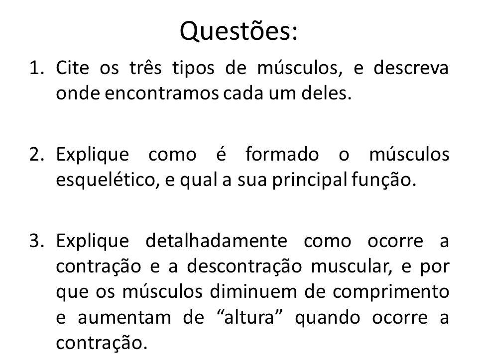Questões: 1.Cite os três tipos de músculos, e descreva onde encontramos cada um deles. 2.Explique como é formado o músculos esquelético, e qual a sua