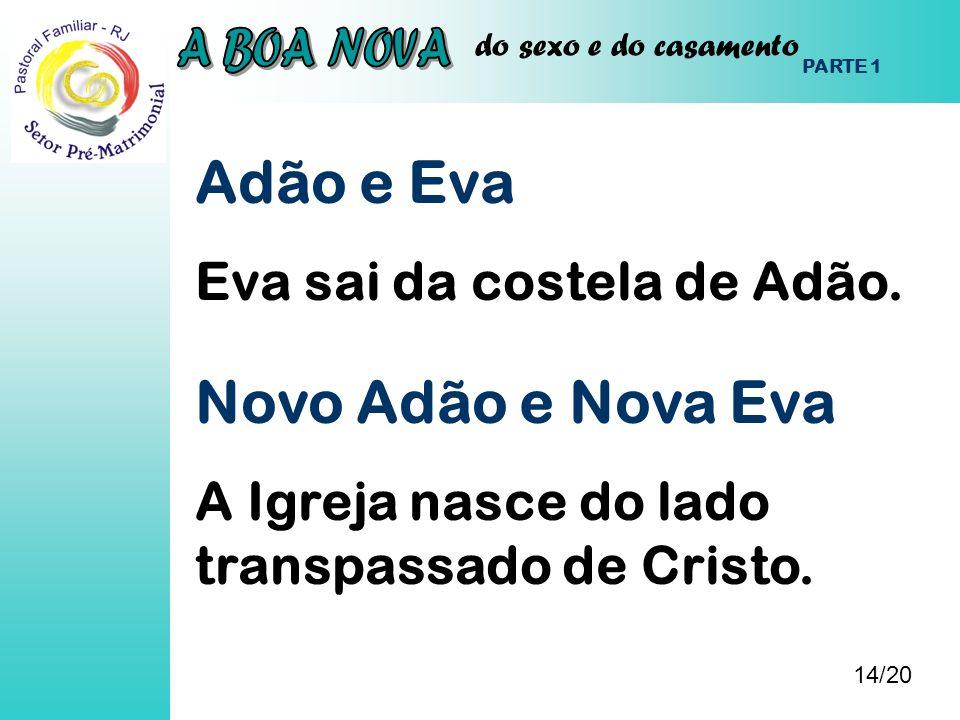 do sexo e do casamento Adão e Eva Eva sai da costela de Adão. 14/20 PARTE 1 Novo Adão e Nova Eva A Igreja nasce do lado transpassado de Cristo.