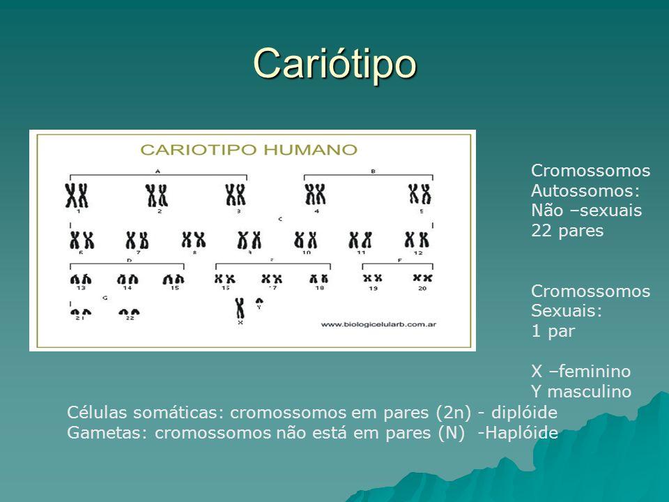 Cariótipo Cromossomos Autossomos: Não –sexuais 22 pares Cromossomos Sexuais: 1 par X –feminino Y masculino Células somáticas: cromossomos em pares (2n) - diplóide Gametas: cromossomos não está em pares (N) -Haplóide